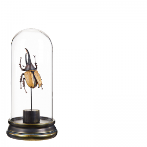 YELLOW BUG IN GLASS DOME
