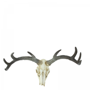 SKULL WALL DECORATION NATURAL