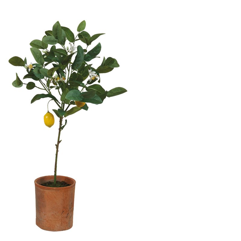 LEMON TOPIARY IN CLAY POT L