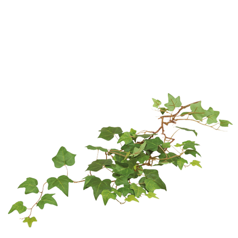 IVY LEAF HANGING BUSH